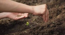 ガーデニングの種まきと方法