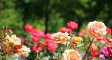 ガーデニングの3月の花壇