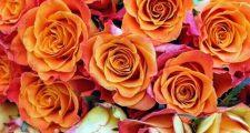 バラのアイアンオベリスクの選び方