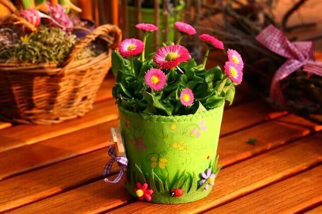 春の種まきにおすすめの花6選