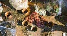 ガーデニングに使う鉢植えの種類