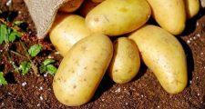 ジャガイモにいい土の作り方