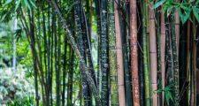 ガーデニングで竹を育てる