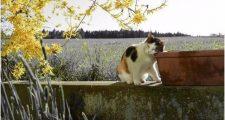 ガーデニングに猫が来る理由と猫除け