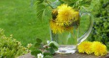 植物の肥料と栄養剤の違い