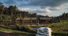 ガーデニングの肥料の種類と使い方