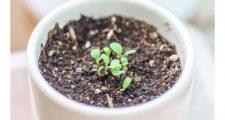 日陰で育つガーデニング植物