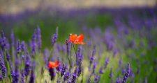夏に育てやすい植物