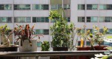 日当たりが悪くても育つ耐陰性植物