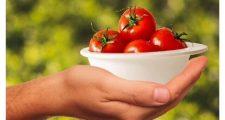 ガーデニングにおすすめのミニトマトの育て方