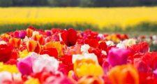 7月に楽しむガーデニングの花